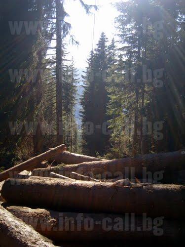 Виктор Кулов - Дърводобив и дървопреработване в Забърдо, Чепеларе