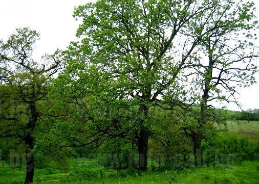 Опитна станция по дъбовите гори Бургас - Лаборатории по екофизиология и горско почвознание в Бургас