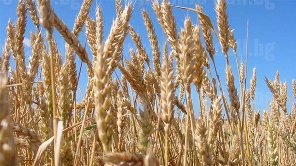 Евро Къмпани ООД - Производство на селскостопанска продукция в Стражица
