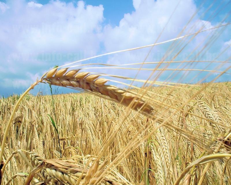 Единство 2006 ООД - Производство на селскостопанска продукция в Добрич