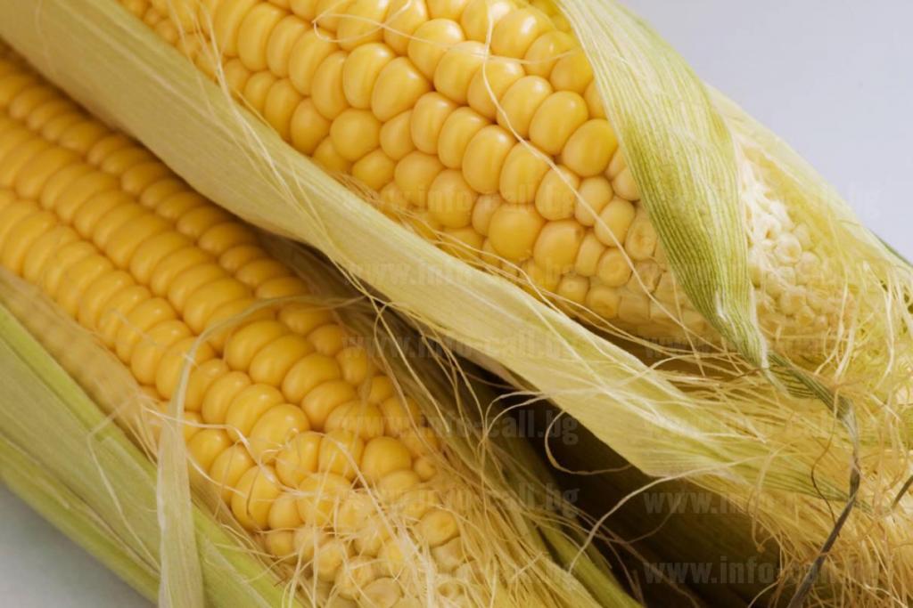 Агросем 2002 ООД - Семепроизводство на зърнени култури в Търнава, Враца