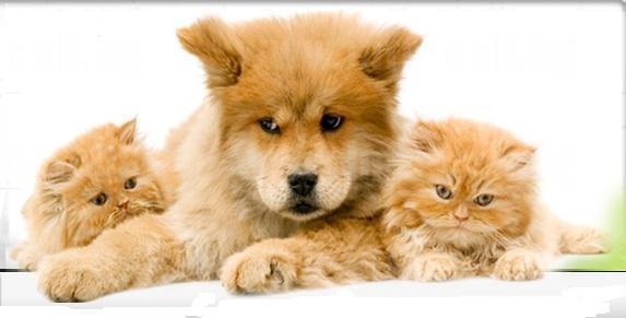 Ветеринарна клиника Доктор Ламбова - Ветеринарна клиника и зоомагазин в Несебър