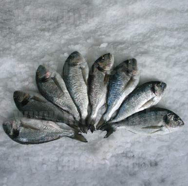 СЕВЕР ЕКСПОРТ - Търговия с риба и рибни продукти във Варна