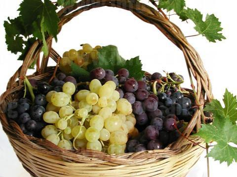 ППК КОРТЕН - Отглеждане на лозя и производство на грозде в село Кортен