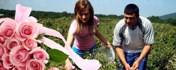 Дамасцена - Производство на Българско розово масло в Скобелево, Павел баня