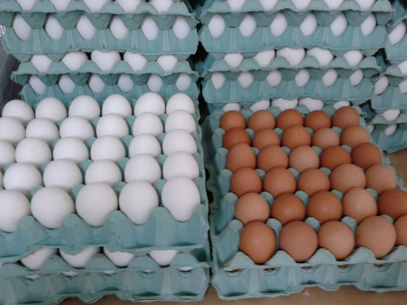 Производство и продажба на яйца в Славяново и София