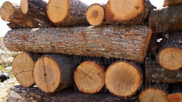 Триманс 1 - Дърводобив и дървообработване в Сърница, Велинград