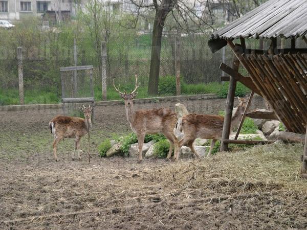 Професионална гимназия горско стопанство Велинград