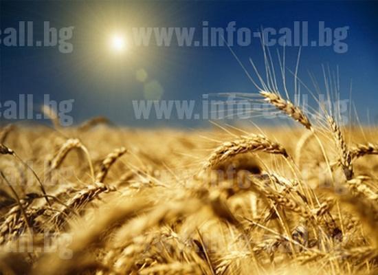 ЗКПУ Земя - Производство селскостопанска продукция в Конуш, Хасково