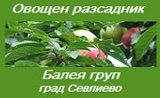 Овощен разсадник Балея груп