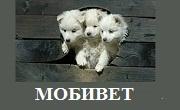 ВЕТЕРИНАРНА КЛИНИКА МОБИВЕТ