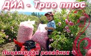 ДИА ТРИО ПЛЮС
