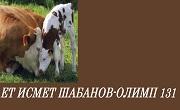 ИСМЕТ ШАБАНОВ ОЛИМП 131