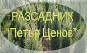 Разсадник Петър Ценов